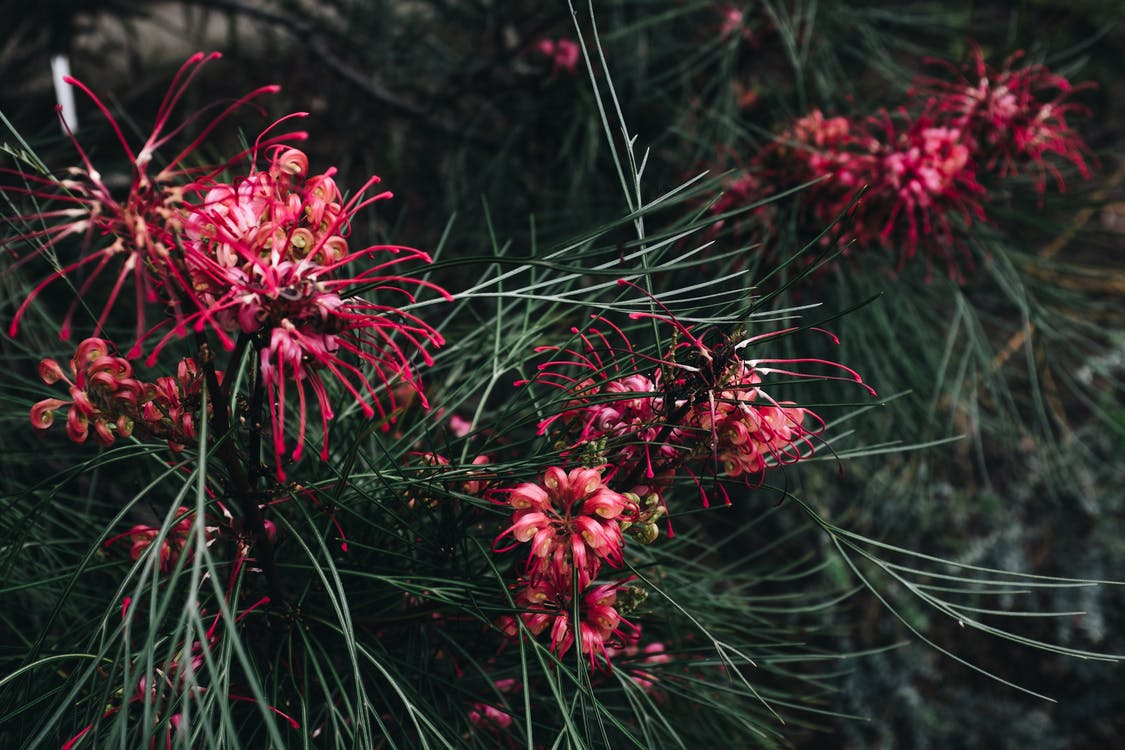 kasvikunta, kaunis, kevyt