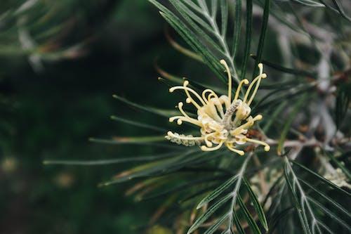 Darmowe zdjęcie z galerii z drzewo, drzewo iglaste, flora, kolor