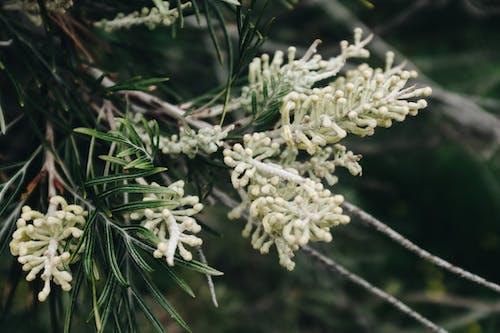Безкоштовне стокове фото на тему «ботанічний, відділення, вродлива, дерево»