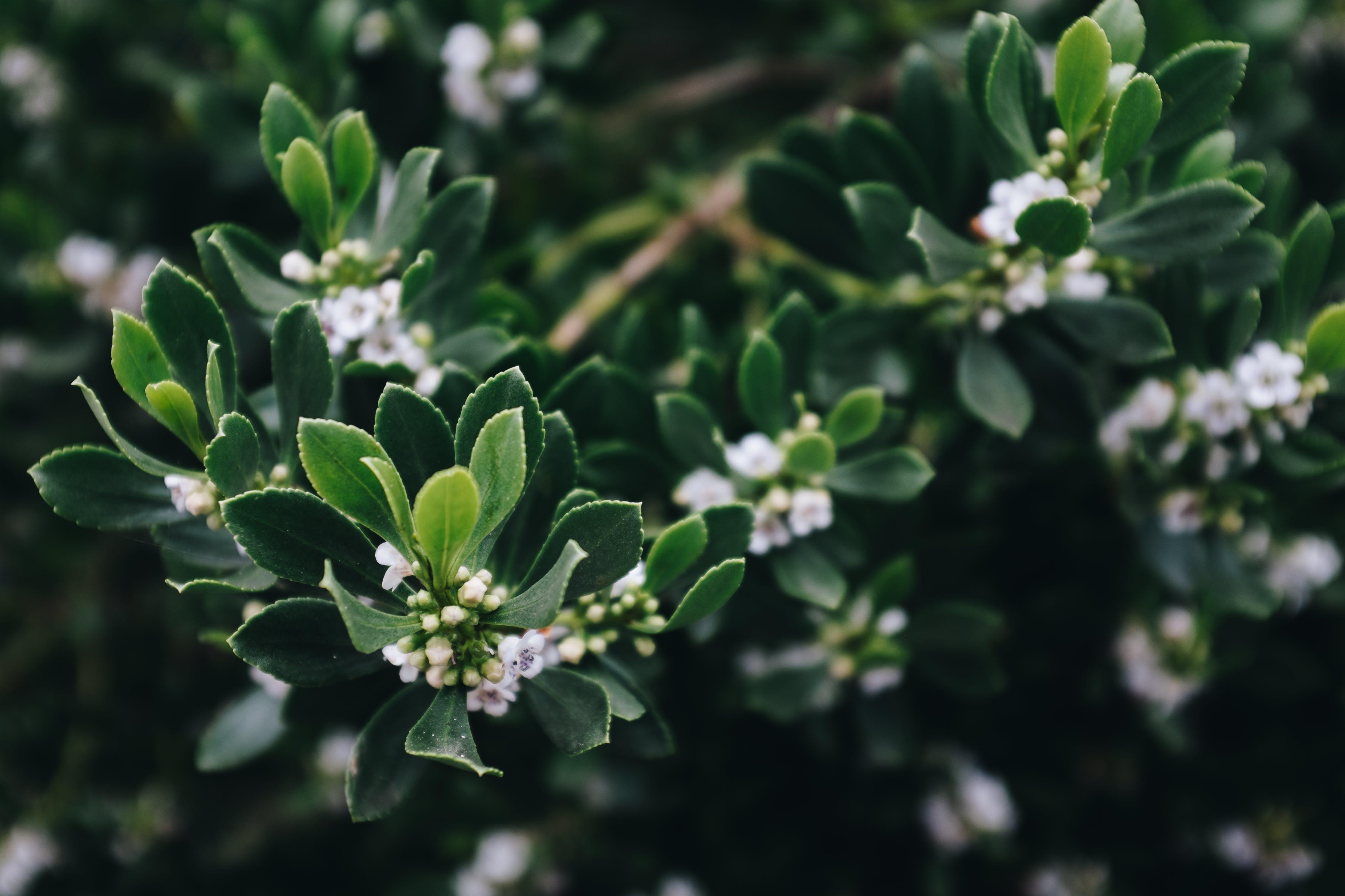 White Cluster Flower Plant