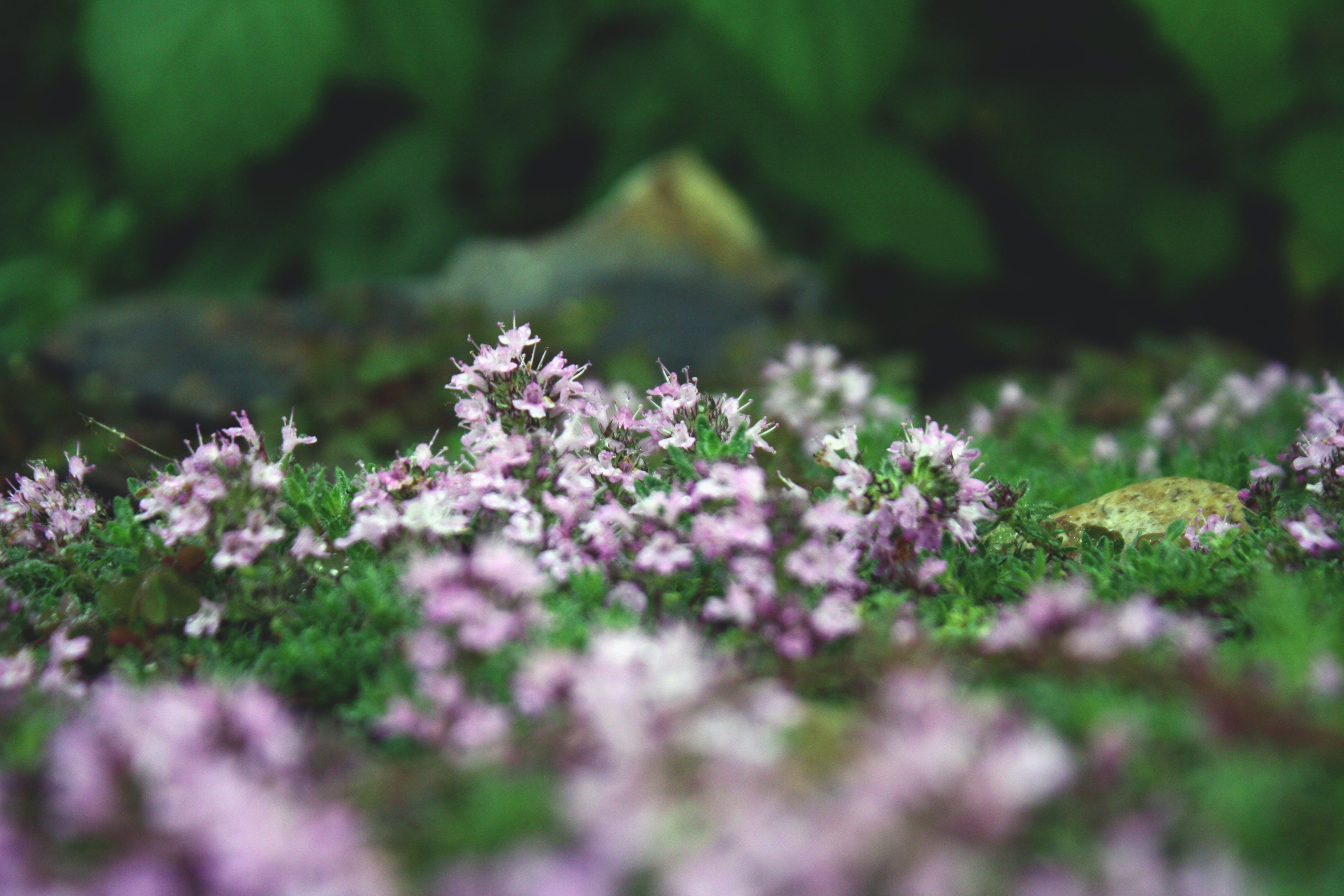 Free stock photo of garden, flower, clover, close up
