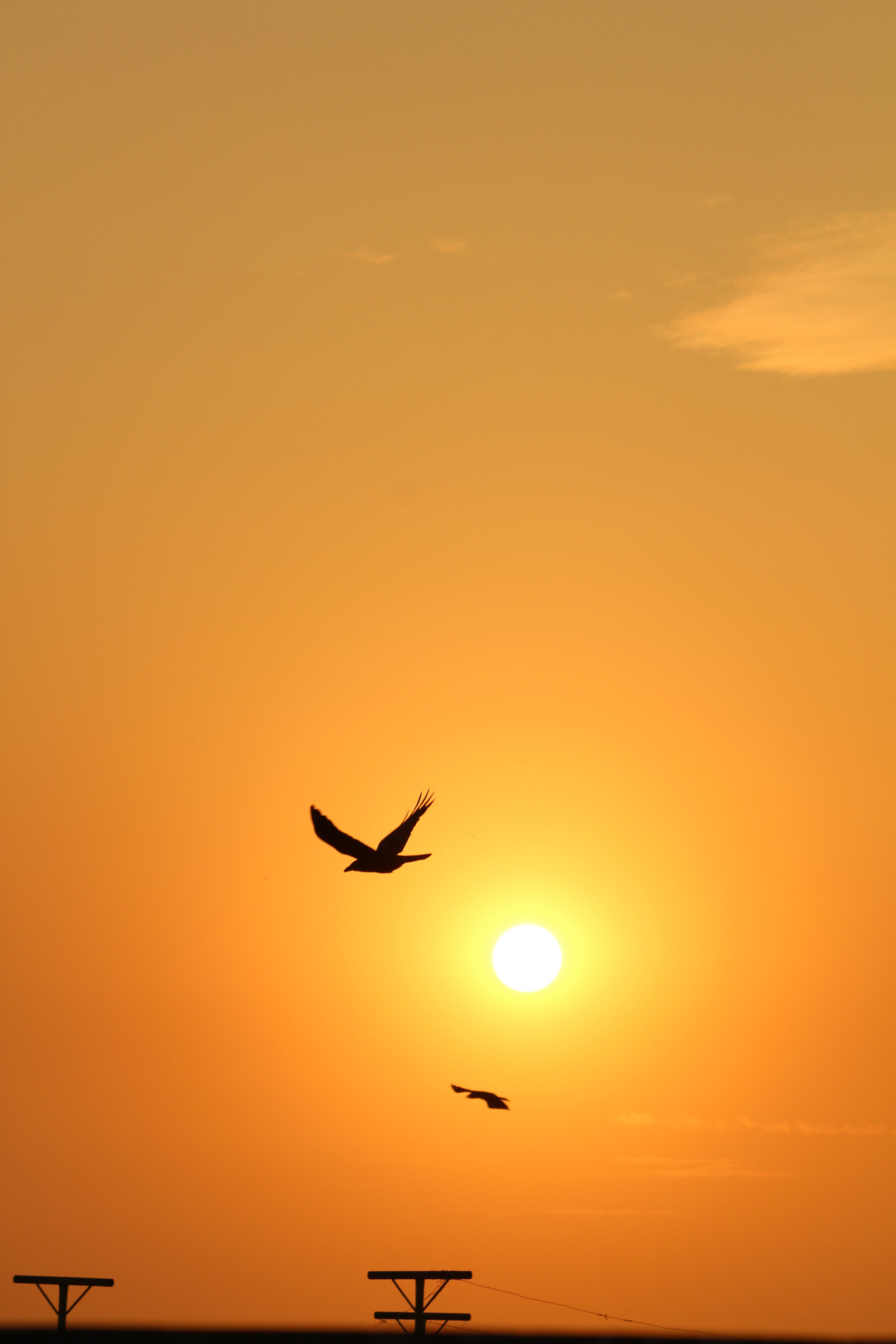 Free stock photo of bird, cool, golden sunset, nature photography