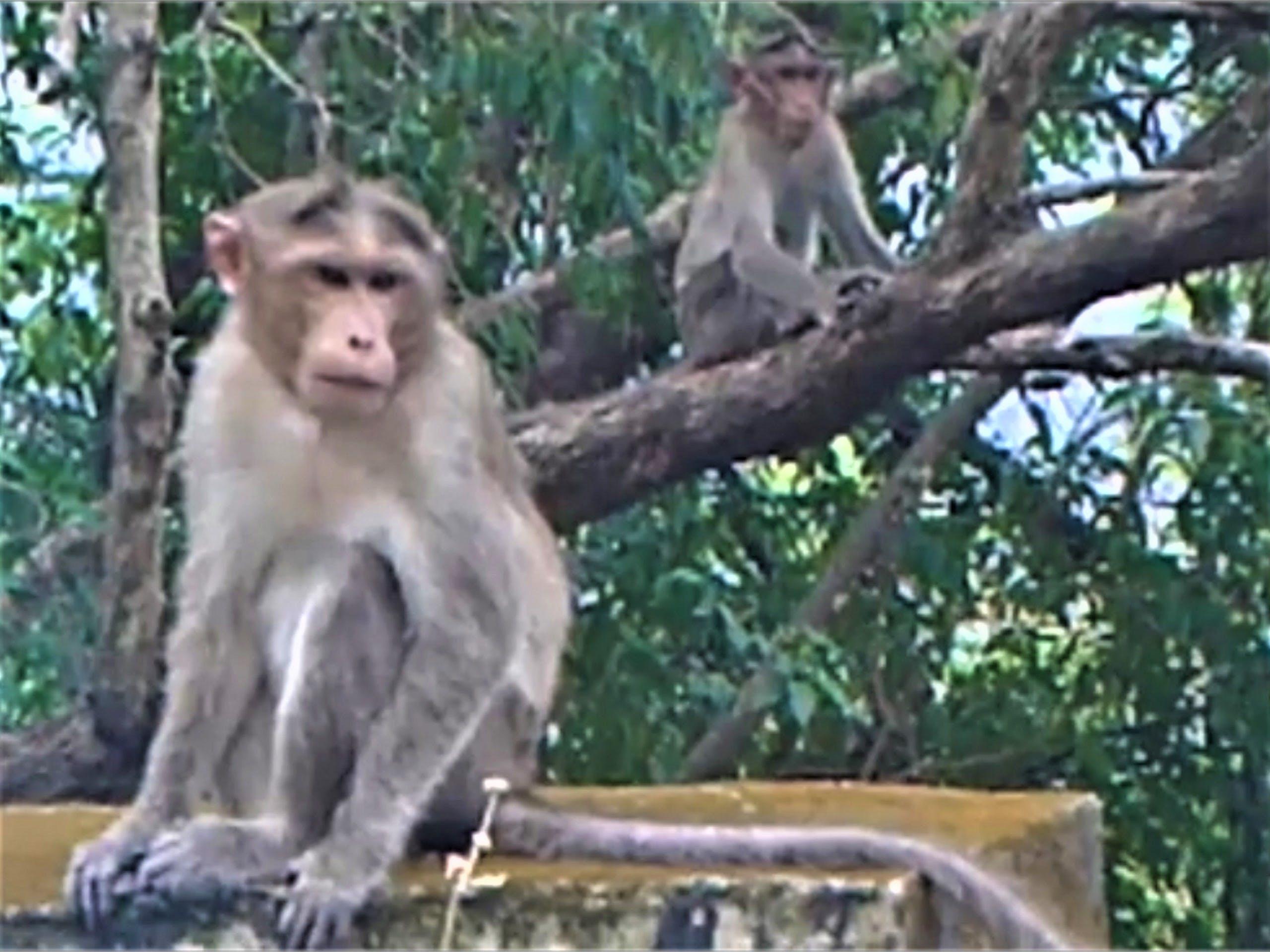 Free stock photo of monkey mountain, monkey sitting, monkeys