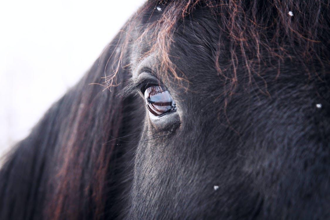 animal, eye, horse