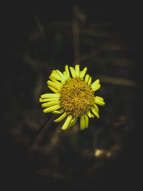 ayçiçeği, sarı içeren Ücretsiz stok fotoğraf