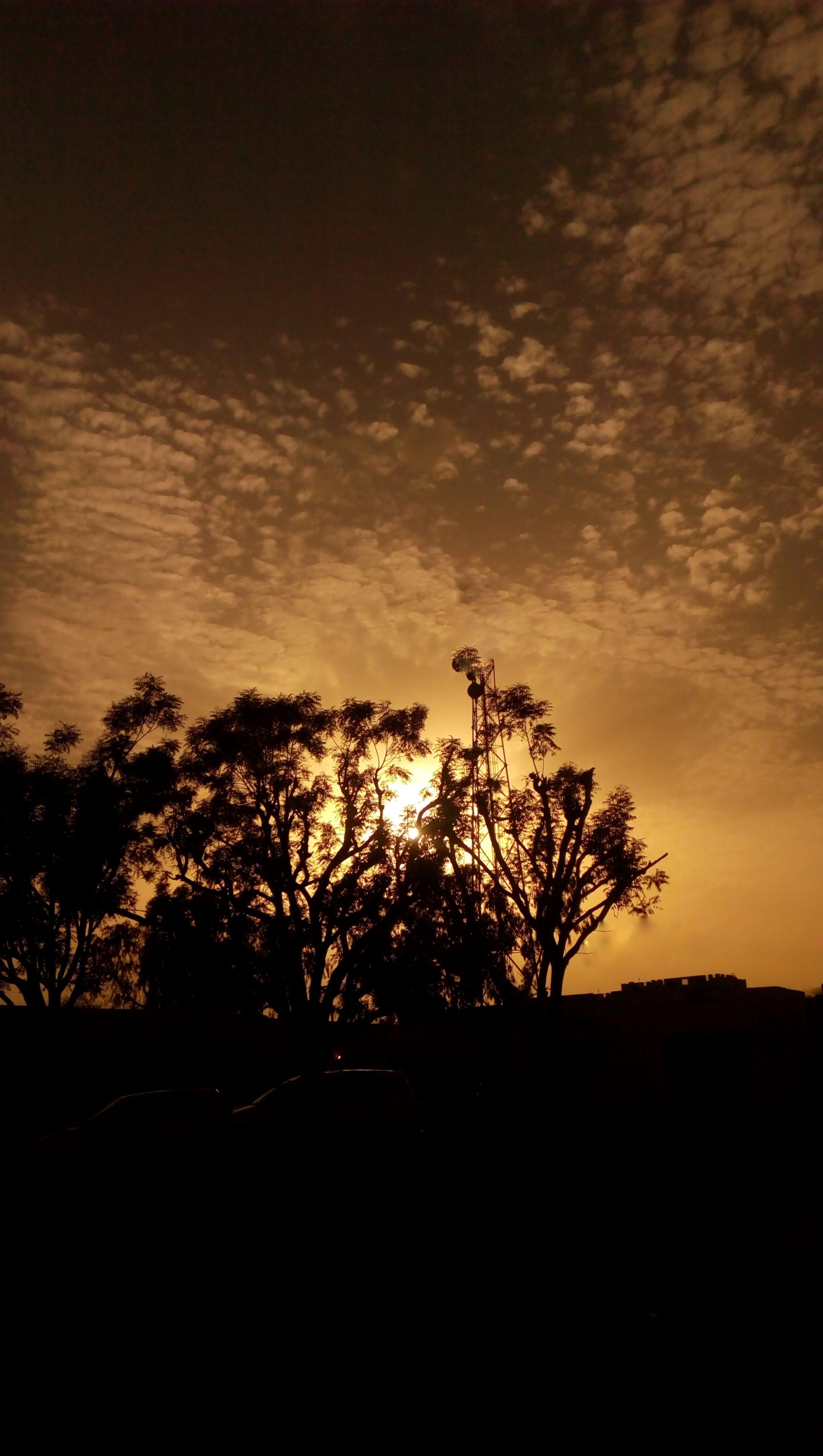 Foto d'estoc gratuïta de #bookstagram #ilumination #tree #trees #eveningwa, #inveninglight #eveningmood #inveningmoon #nature #n