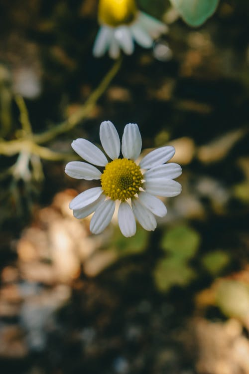 增長, 季節, 植物群, 模糊 的 免费素材照片