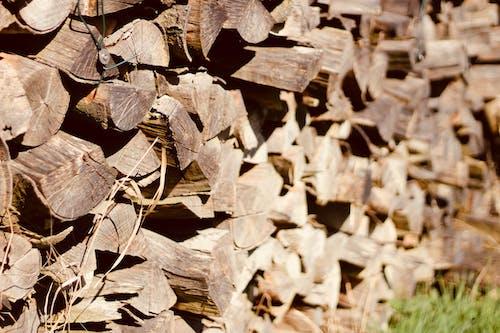 나무, 모양, 무더기, 불의 무료 스톡 사진