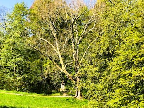Ingyenes stockfotó baã¼me, emlékmű, fa, wald témában