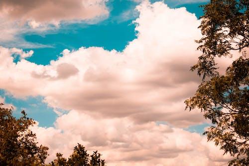 Foto d'estoc gratuïta de arbre, brillant, clareja, estiu