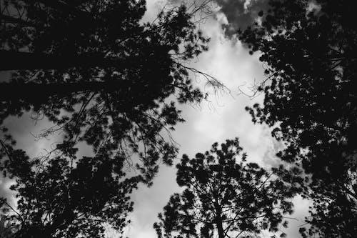 Δωρεάν στοκ φωτογραφιών με δασικός, δάσος, δέντρο, καιρός