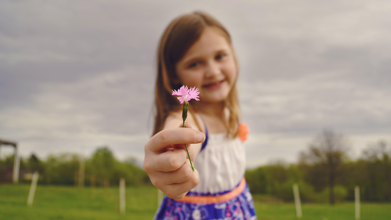 Kostenloses Stock Foto zu blume, flora, fokus, freude