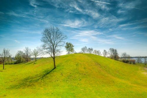 alan, çim, gün doğumu, Güneş içeren Ücretsiz stok fotoğraf