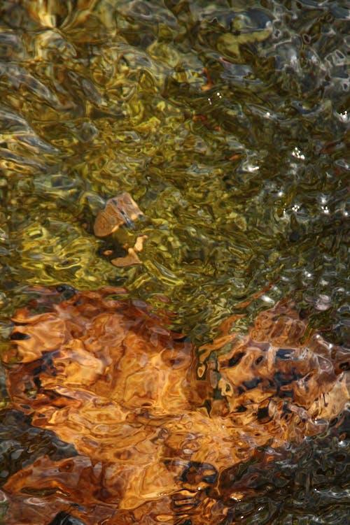 Free stock photo of nature, water