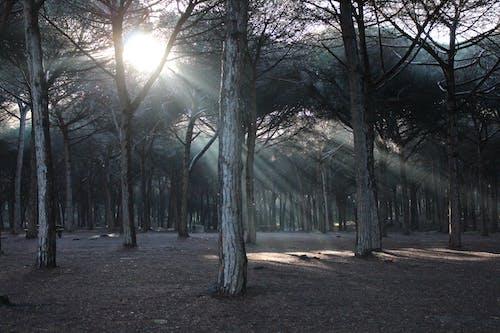 Základová fotografie zdarma na téma dřevo, krajina, lehký, les