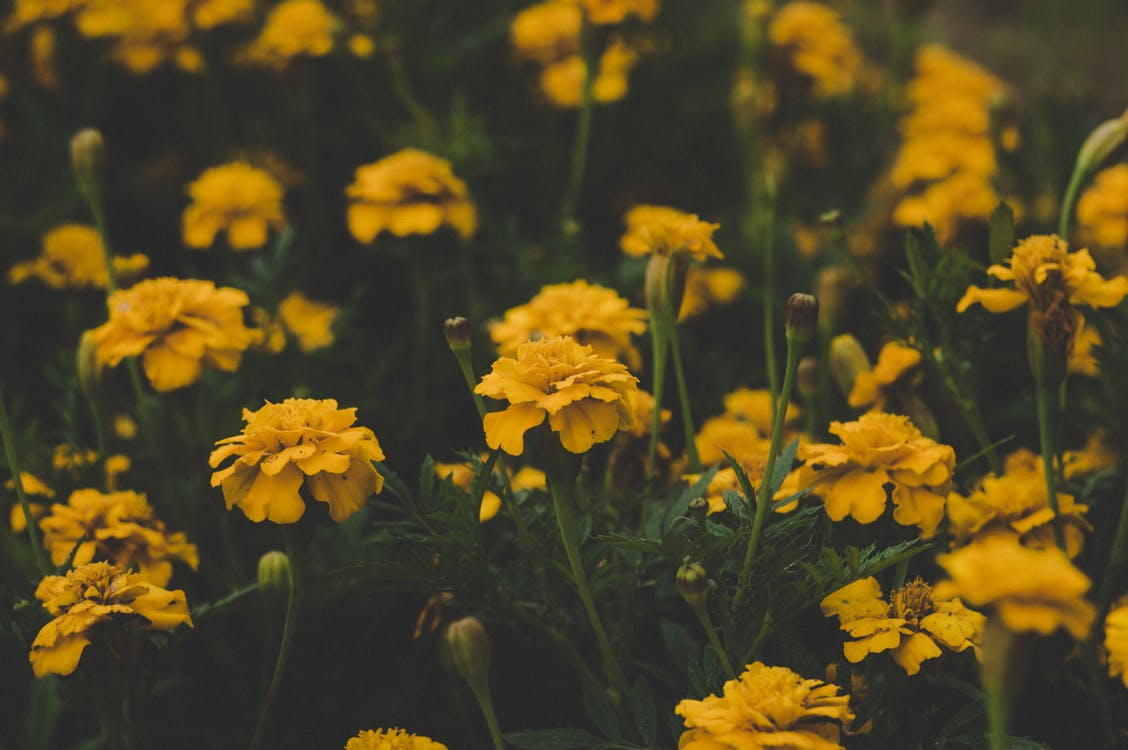 Shallow Focus Photography of Yellow Flowers