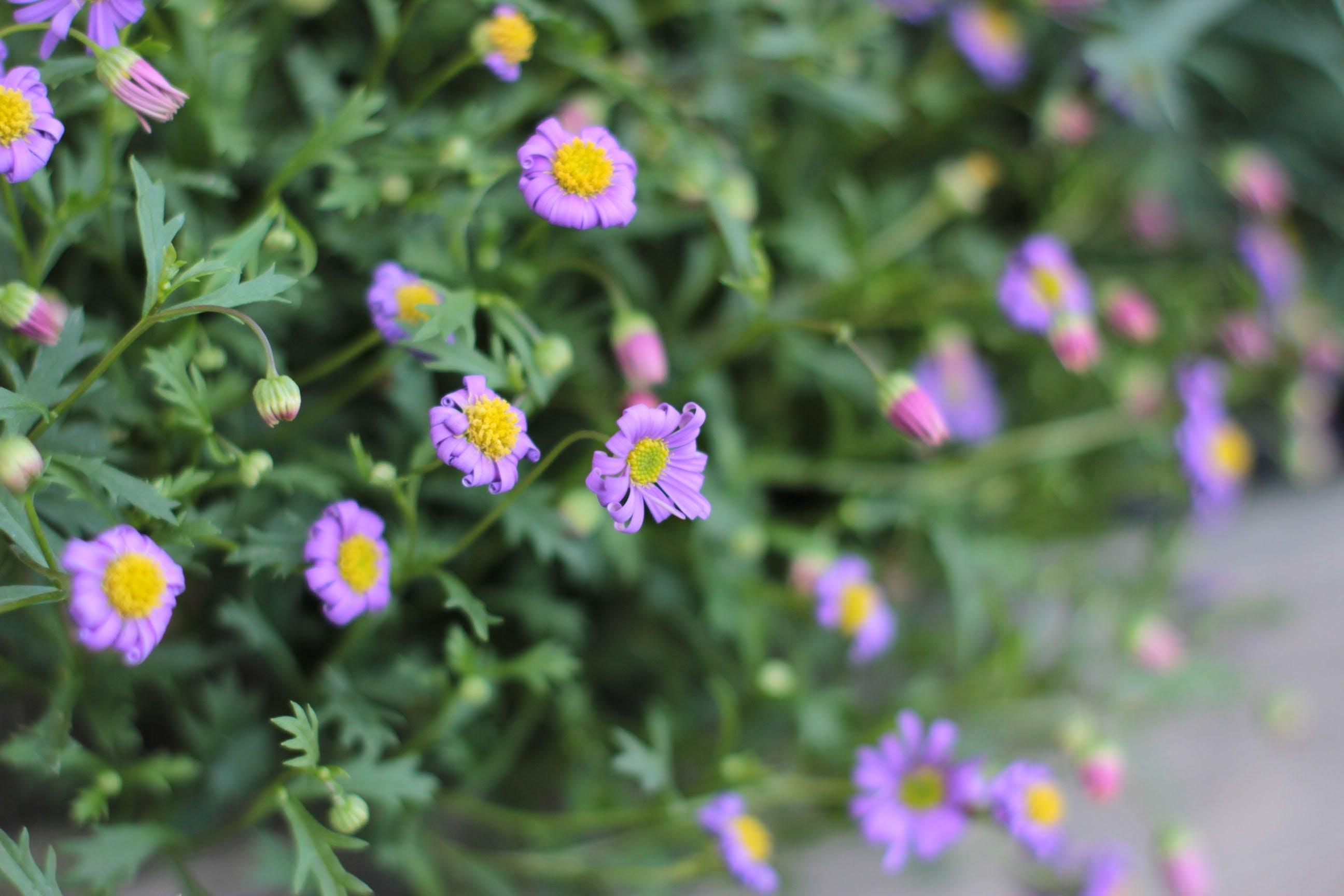 blurry, closeup, flower