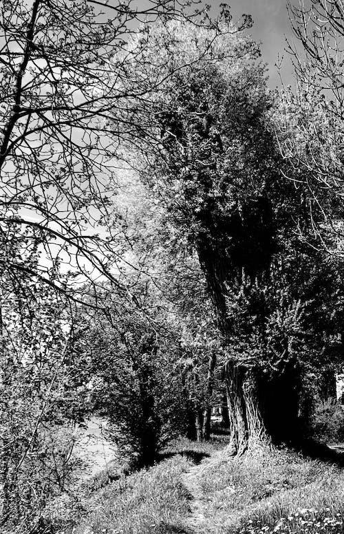 Ingyenes stockfotó erdő, fa, retro, sw témában