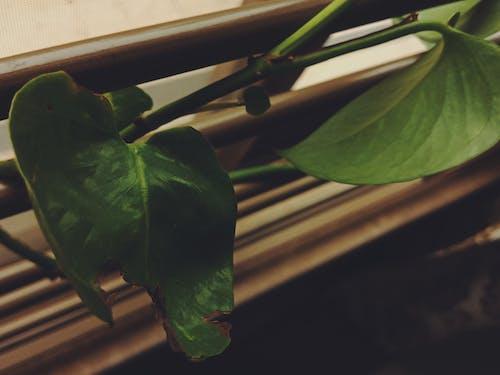 คลังภาพถ่ายฟรี ของ พร่ามัว, มุ่งเน้น, สีเขียว