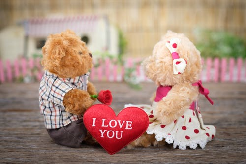 100 Interesting Teddy Bear Photos Pexels Free Stock Photos