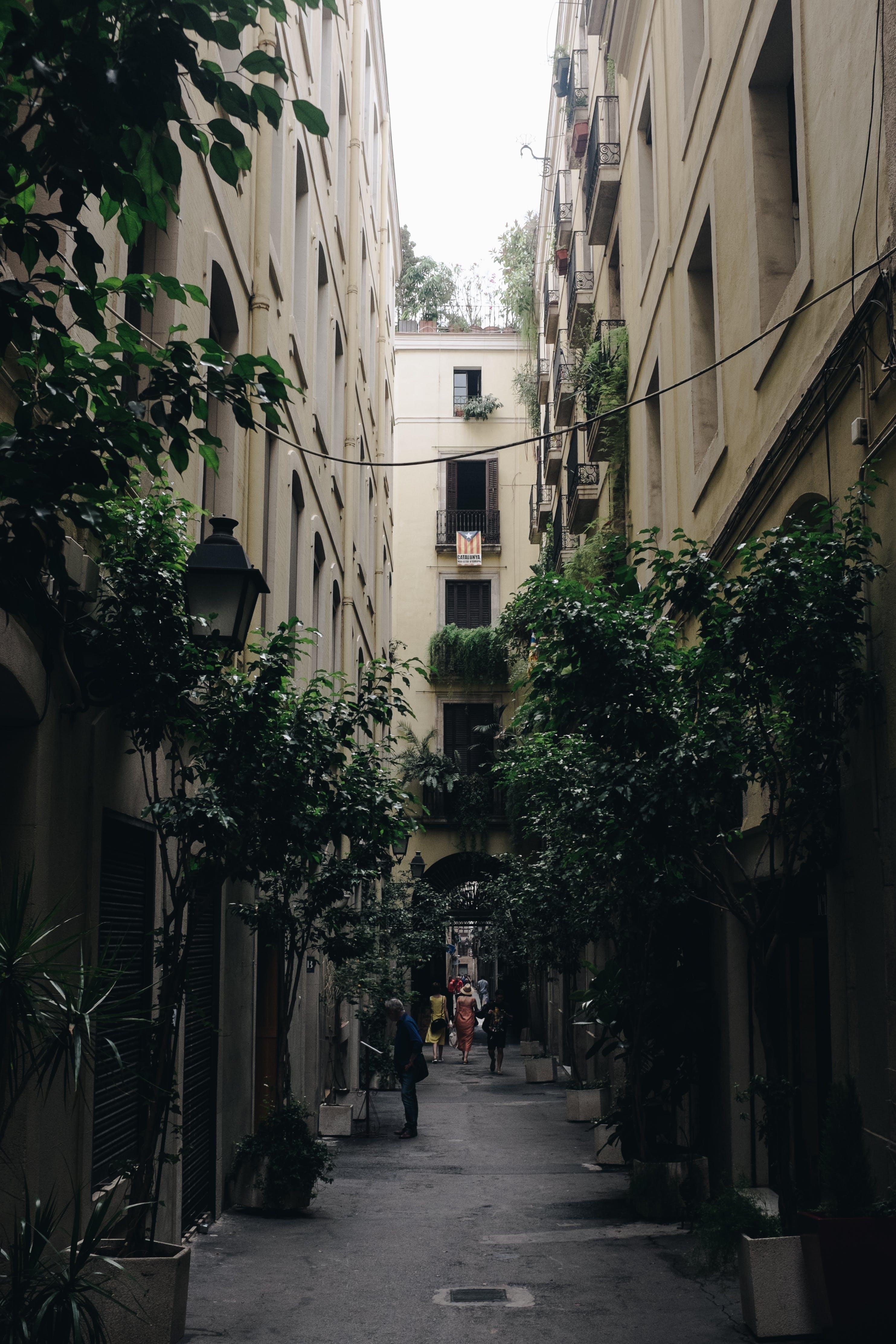 คลังภาพถ่ายฟรี ของ ตึก, ต้นไม้, ทางเดิน, บ้าน