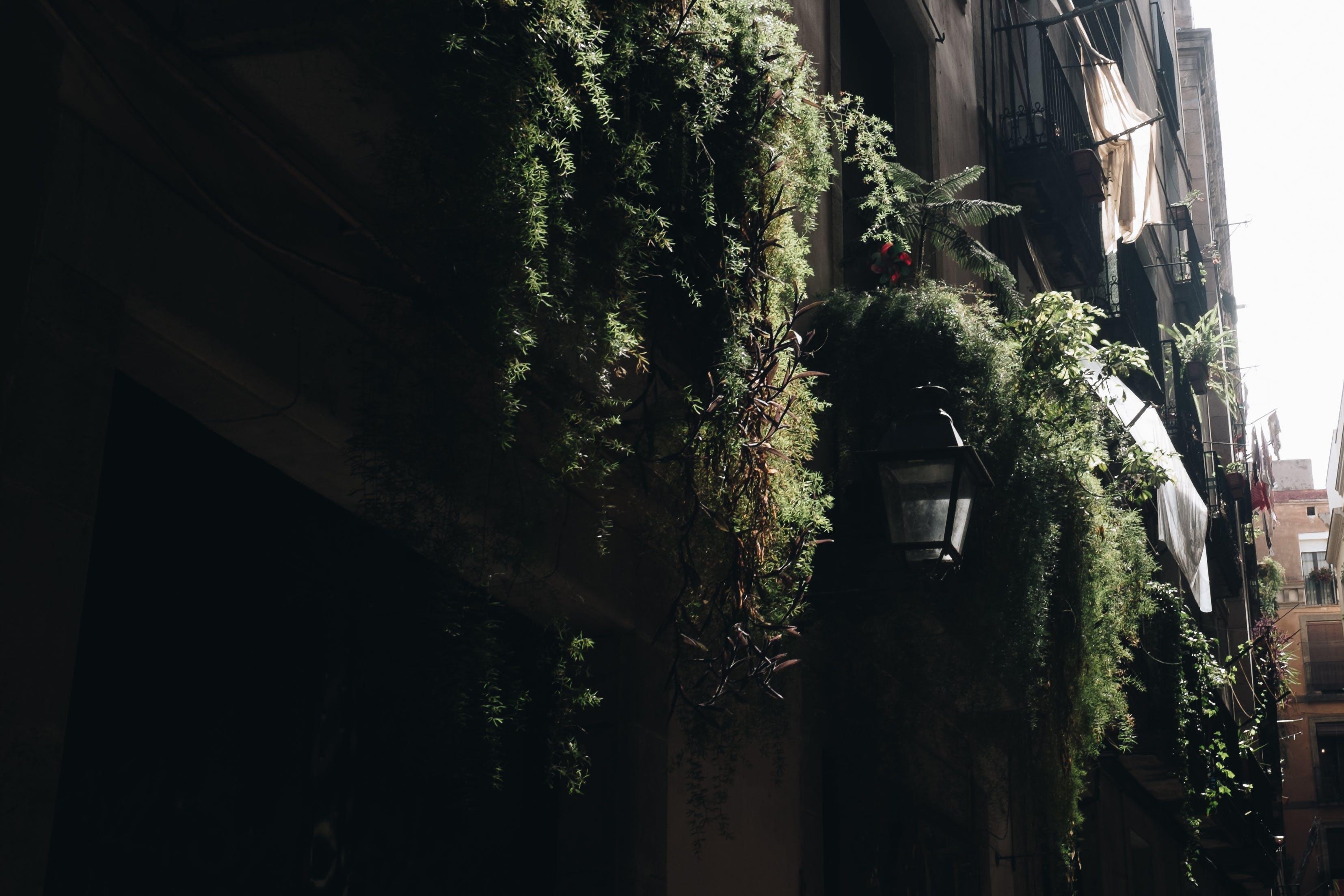 Concrete Building Surrounded by Potted Vine Plants