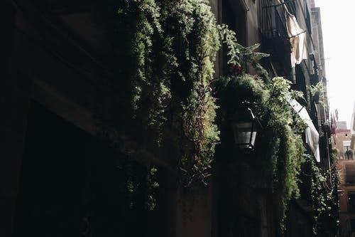Ảnh lưu trữ miễn phí về các cửa sổ, các tòa nhà, cây, kiến trúc