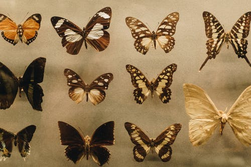 Photo of Assorted Butterflies
