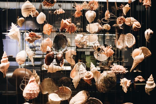 Photo of Seashells Hanging