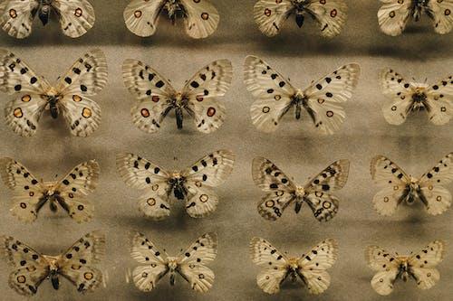 Brown Moth Lot