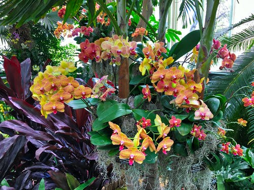 Free stock photo of ny botanic garden, orchids