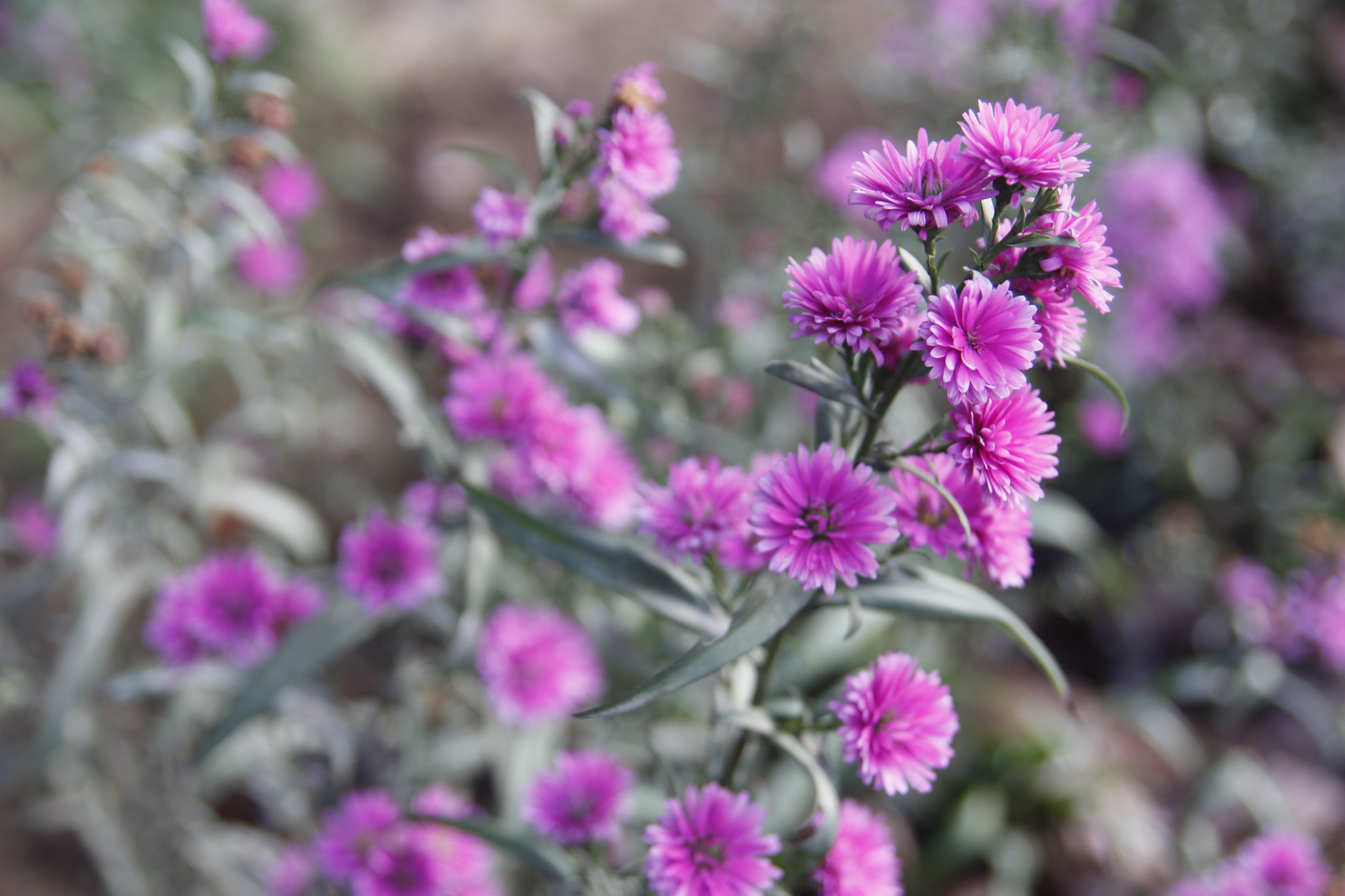 blomster, blomstermotiv, blomstrende