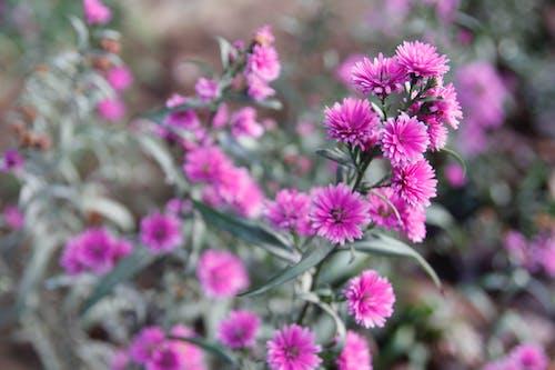 增長, 微妙, 明亮, 植物的 的 免費圖庫相片