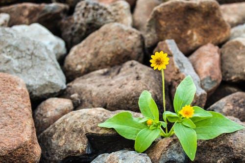 Безкоштовне стокове фото на тему «життя, жовтий, зелений, зростання»