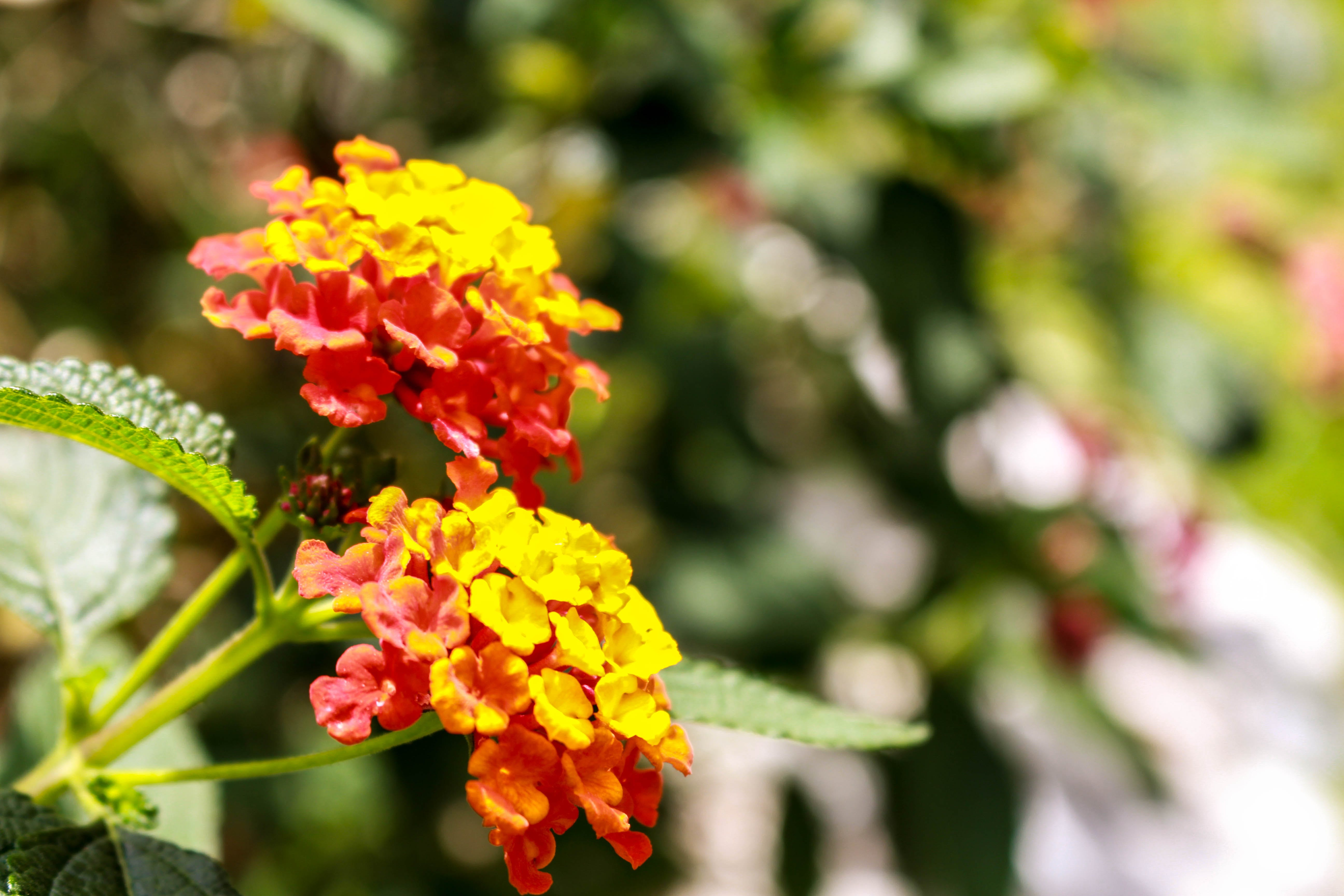 Free stock photo of blur, flower, mexico, nature