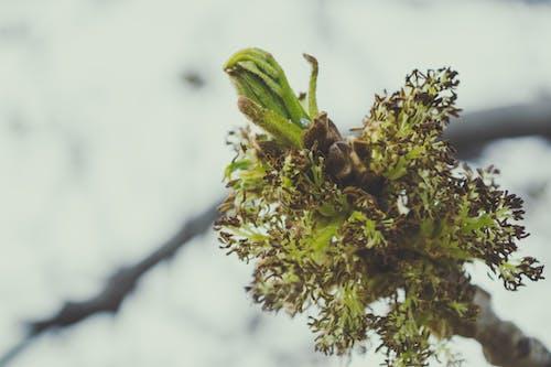 Immagine gratuita di albero, ambiente, crescita, fiore