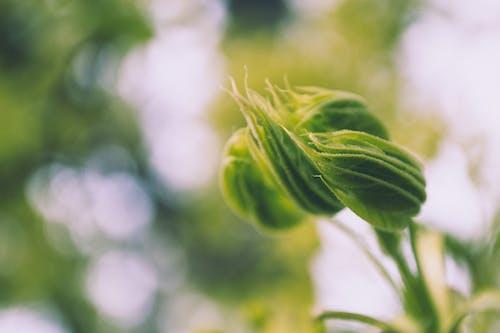 Gratis lagerfoto af close-up, dof, friskhed, græs