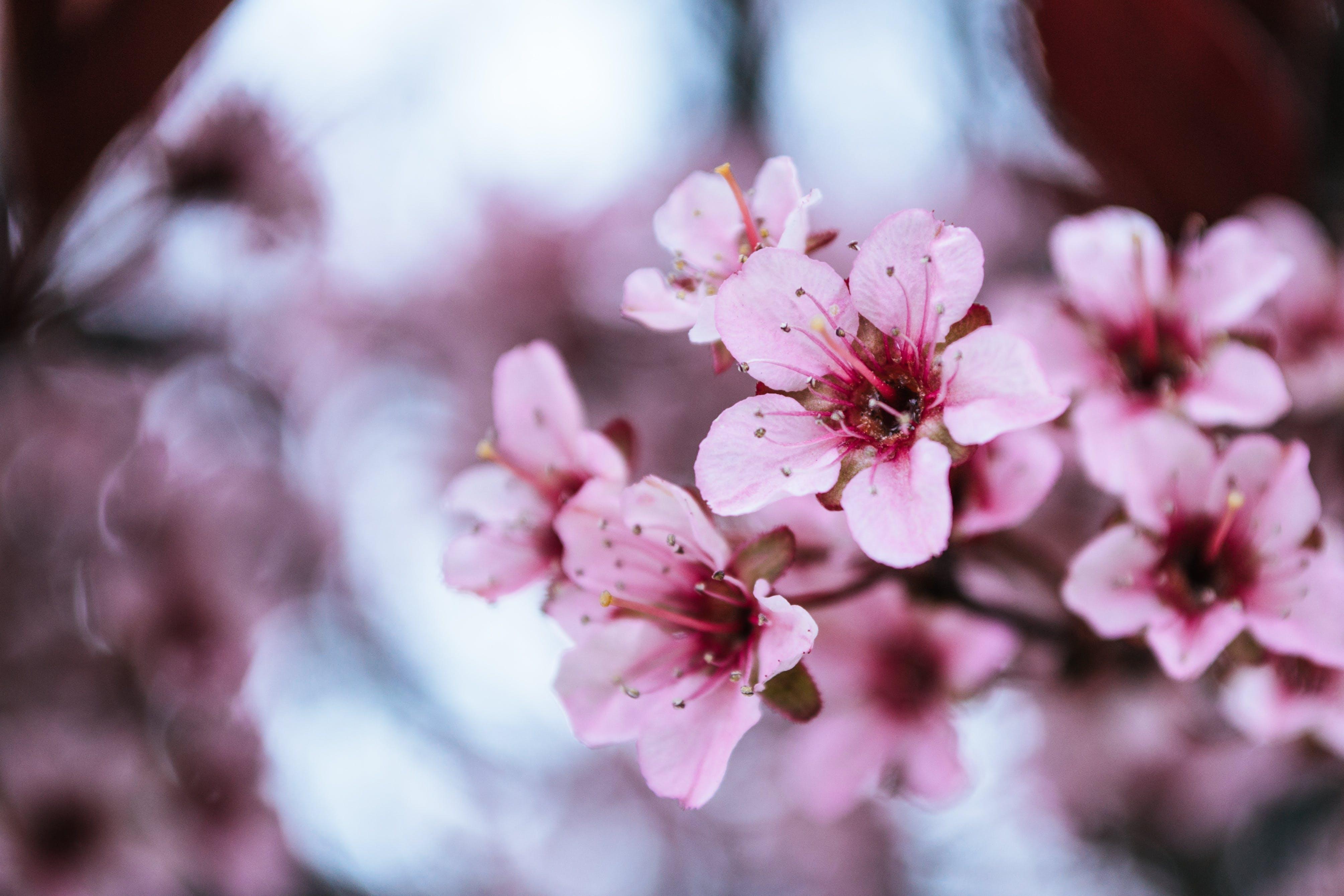 Kostenloses Stock Foto zu blumen, blüte, blütenblätter, dof
