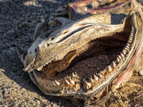 Free stock photo of nature, sand, dry, animal
