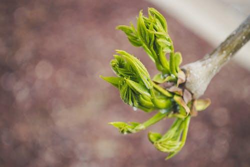 Foto stok gratis berbayang, berfokus, cabang, flora