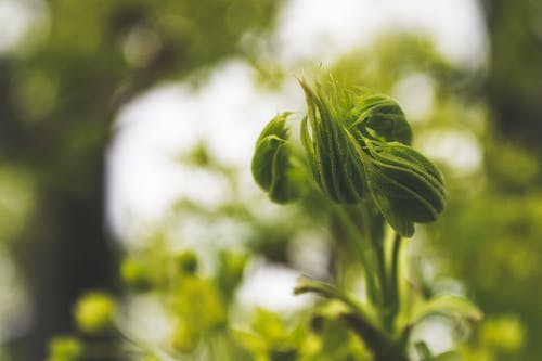 Macro Photography of Flowers Buds
