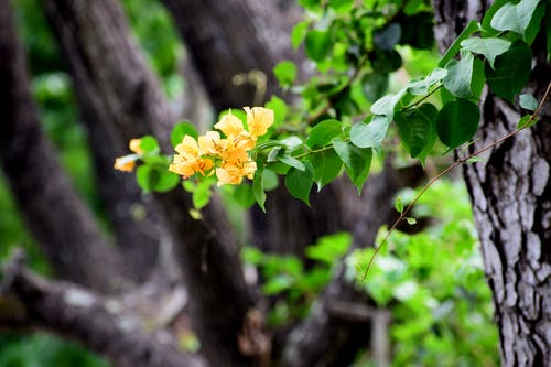 Free stock photo of beautiful flowers, bougainvillea, colors of autumn