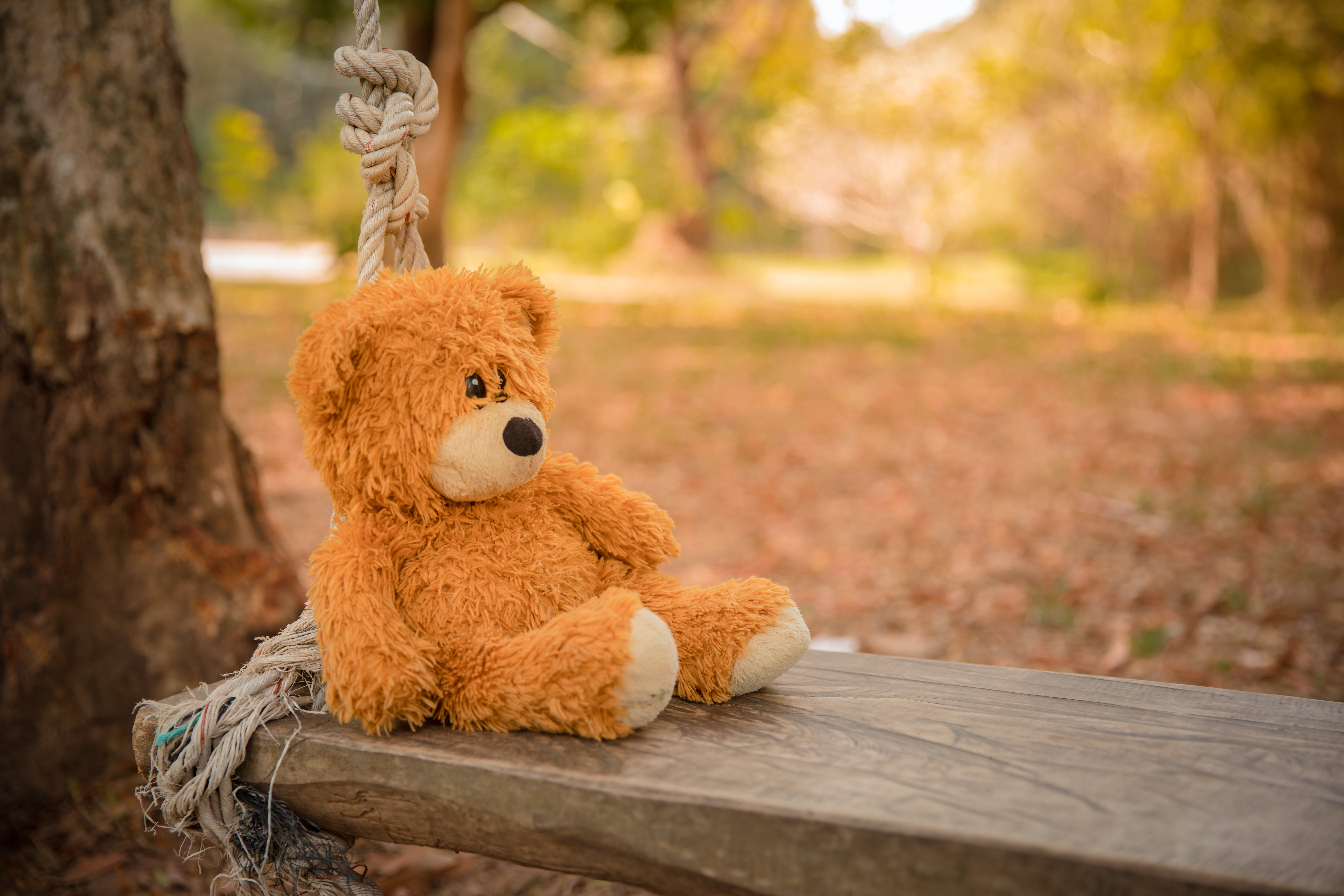 Close-Up Photography of Teddy Bear on Wooden Swing