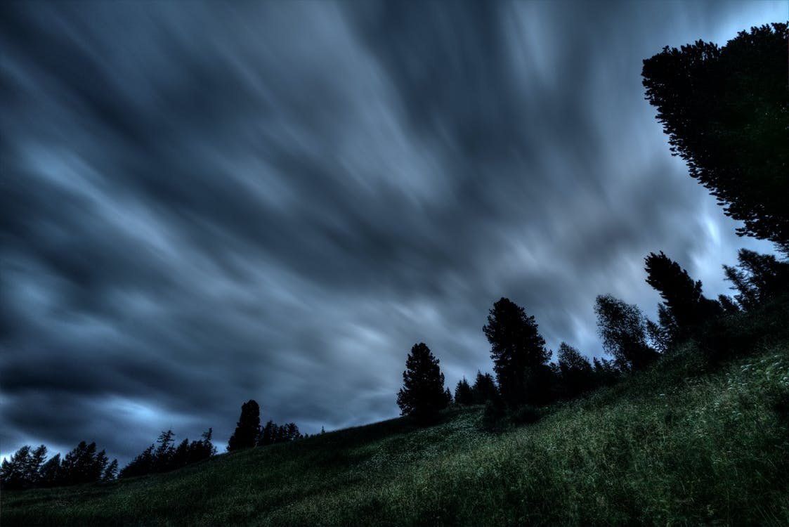 Silhouette Photo of Trees Under Gray Clouds