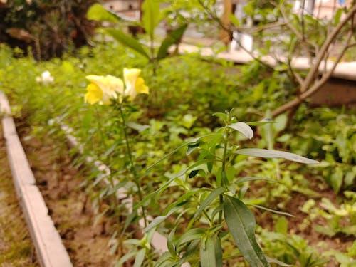 คลังภาพถ่ายฟรี ของ ดอกไม้, สด, สิ่งแวดล้อม, สีเขียว