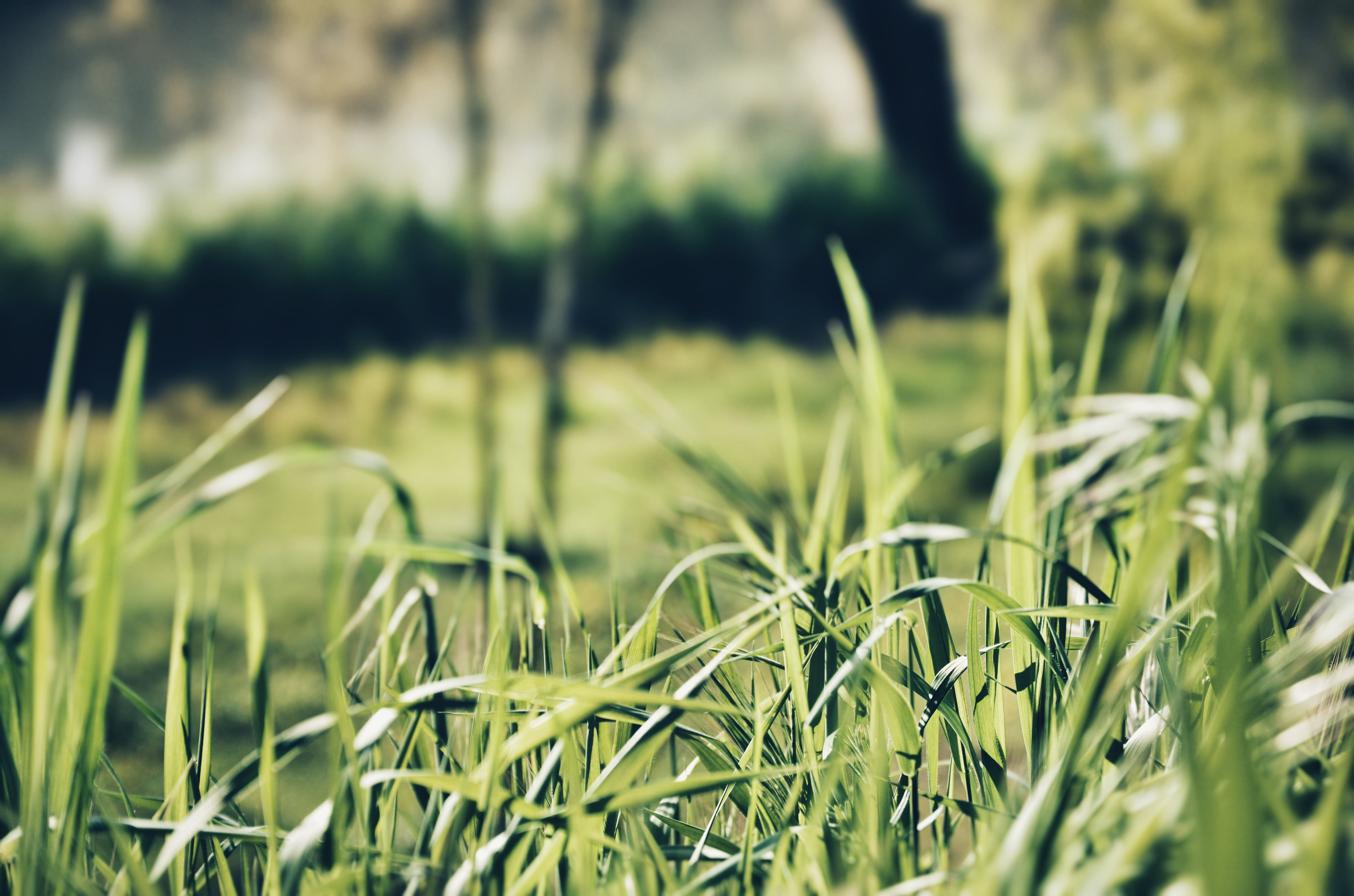 Close-up Photography of Green Grasses