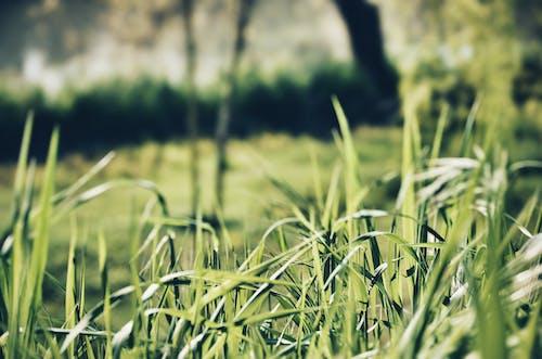 Gratis arkivbilde med åker, gress, plen, uskarphet