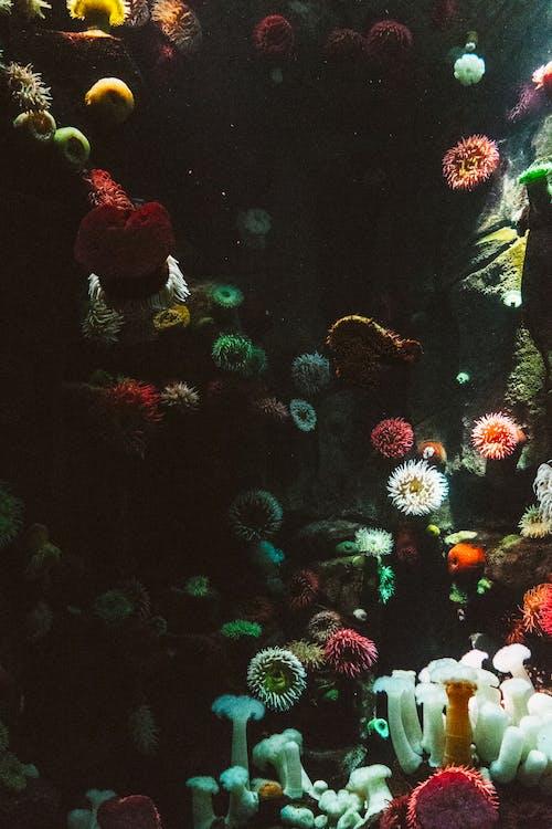 Foto d'estoc gratuïta de aigua, aquari, art, color