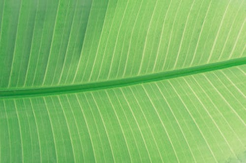 Ingyenes stockfotó aszimmetria, botanikus, buja, ér témában