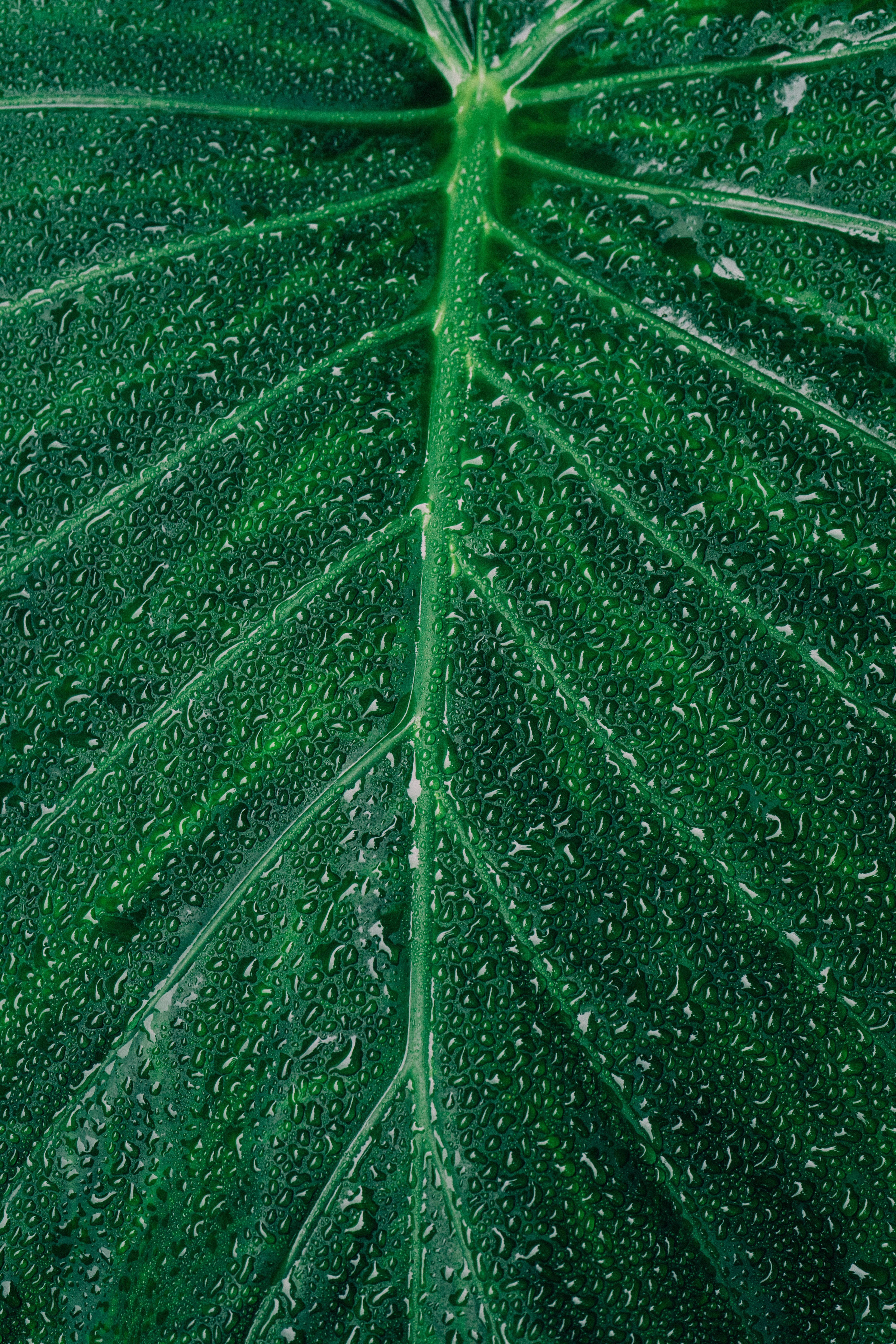 Close-up Photography of Dewdrops on Leaf